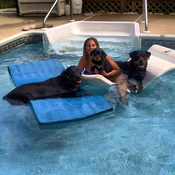 Rotties cooling off in the pool