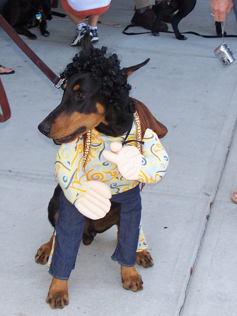 Hippie Doberman