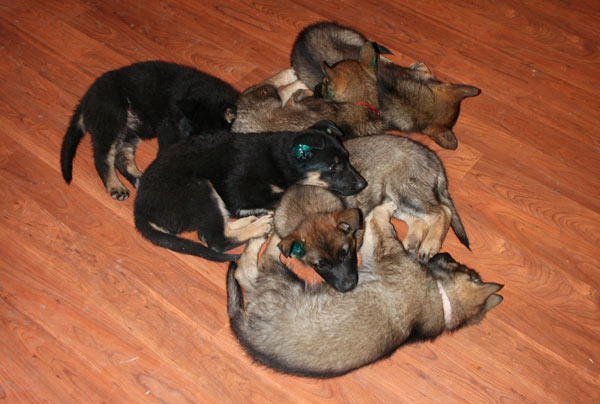 Pile-of-Shepherds-Slave2TehTink-on-Flickr