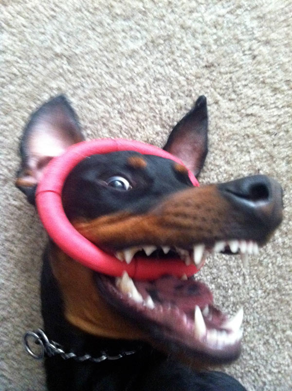 Ring-Toy
