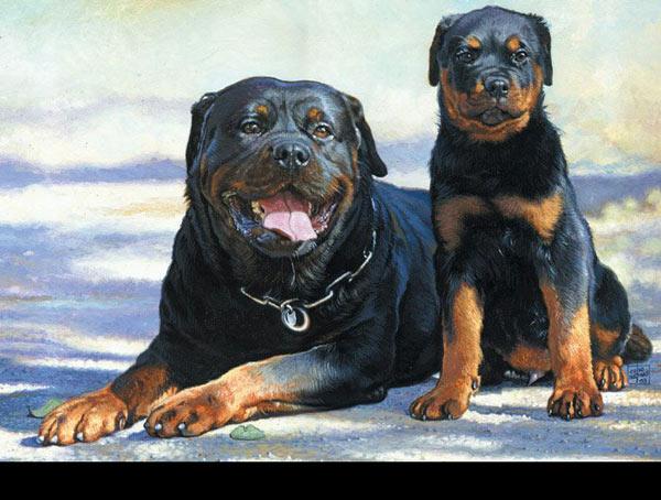 Rottweiler_by_oazen2008