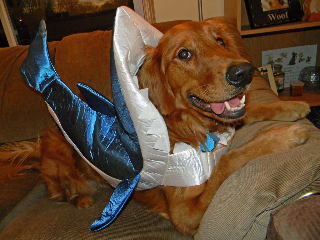 Shark Retriever