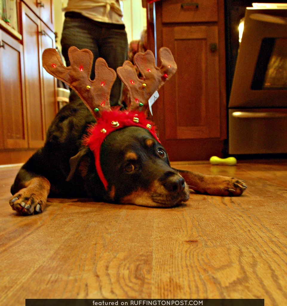 Bella in a end-of-Christmas slump