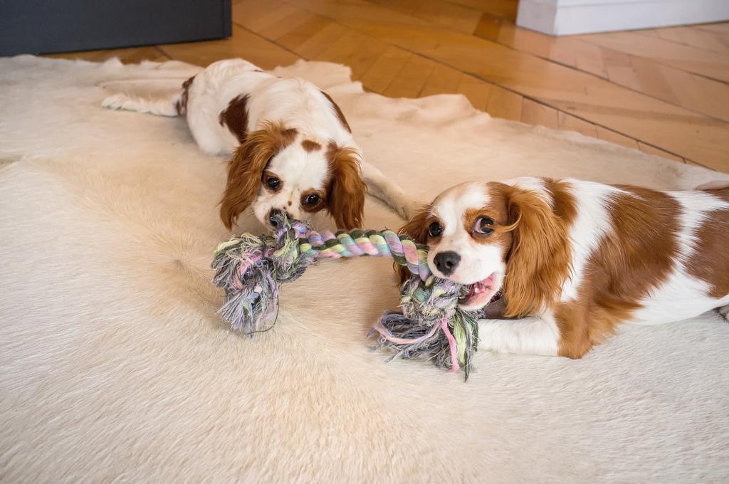 Byrdie & Scarlett