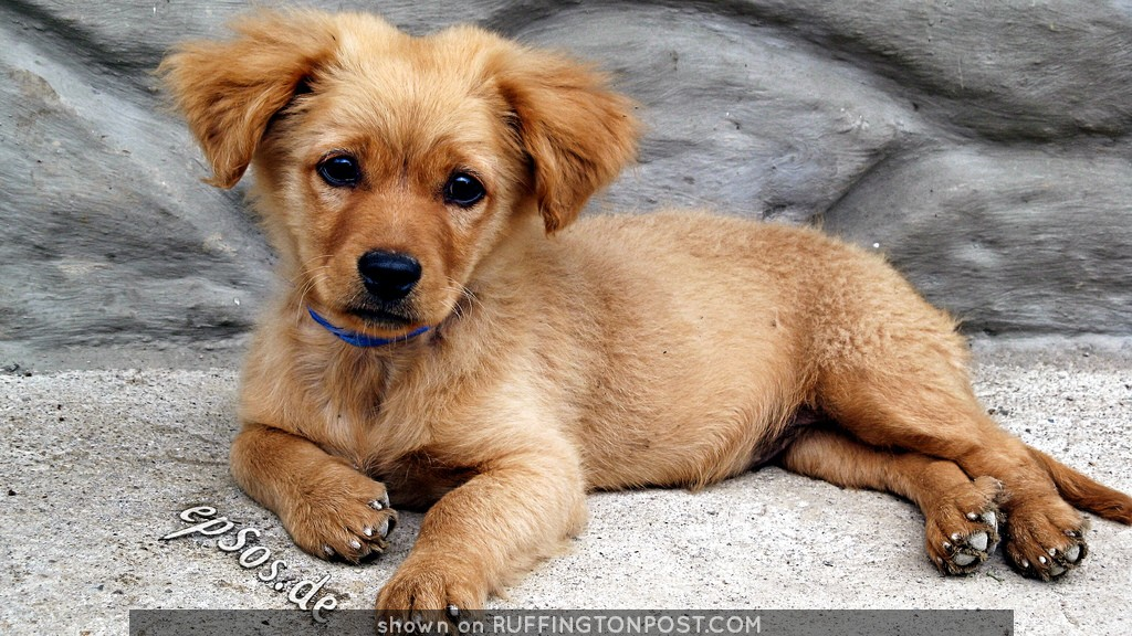 Cute Dog Puppy