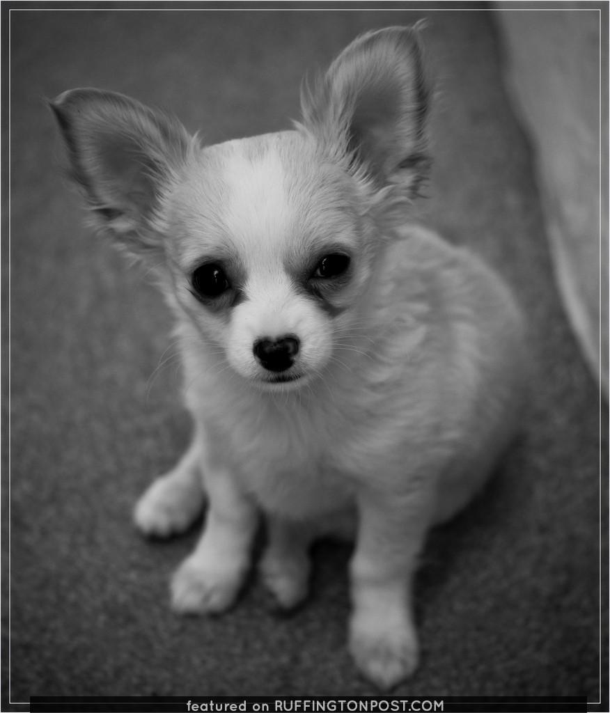Fudge Puppy 1