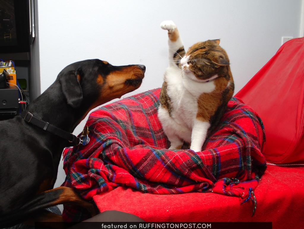 Get the cat!