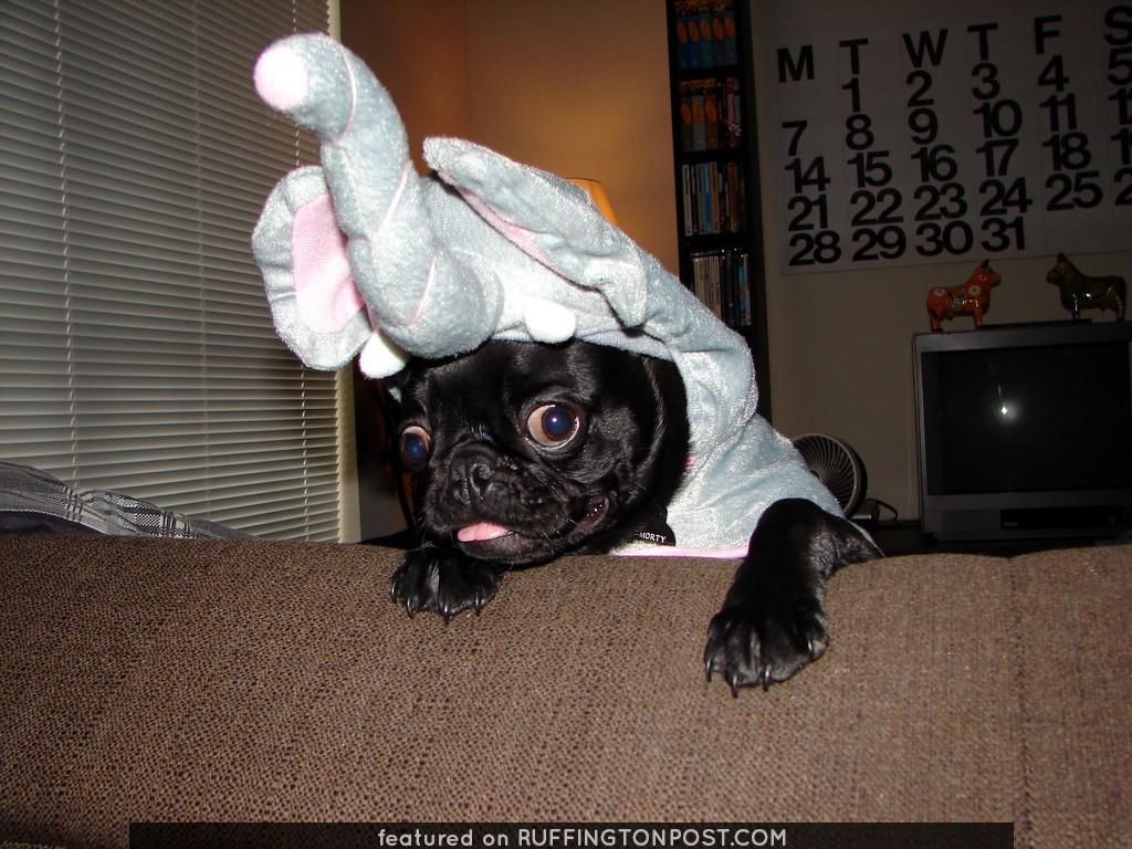 Morty the Elephart