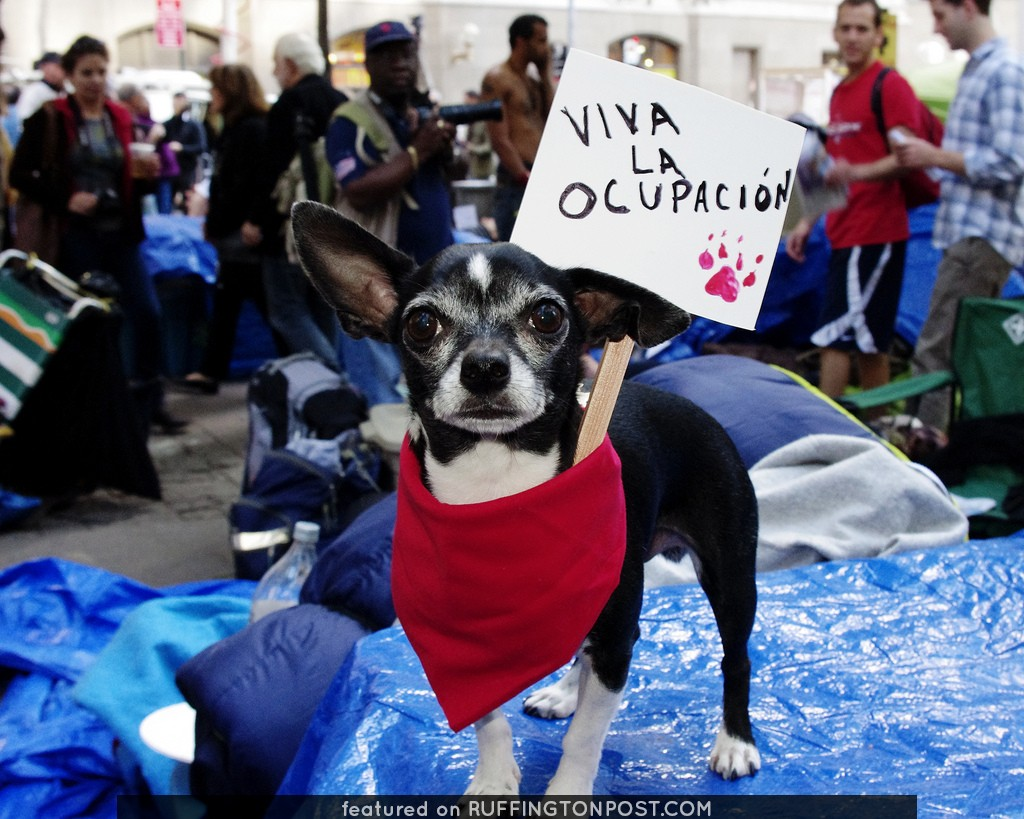 Occupy Wall Street Dogs Animals Chihuahua Pets 2011