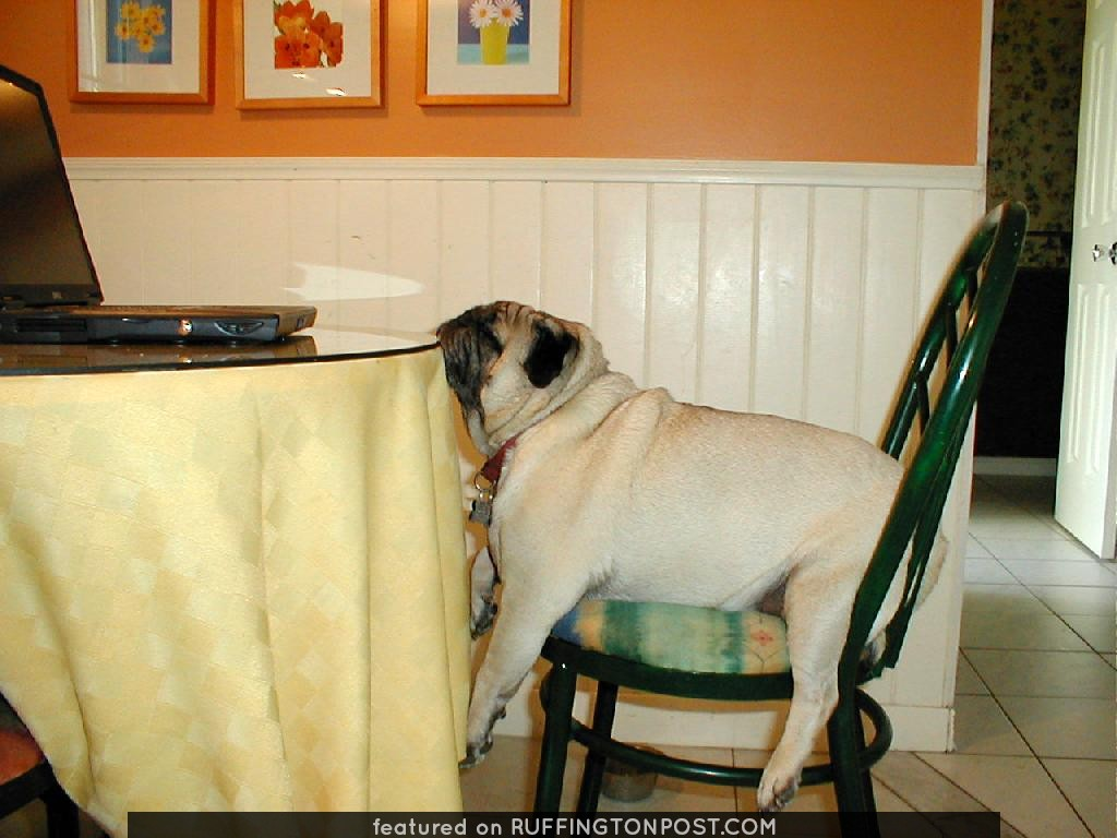 Otis at the table