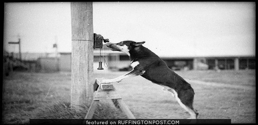 Police Dog, Tess, 29/1/35 / by Sam Hood