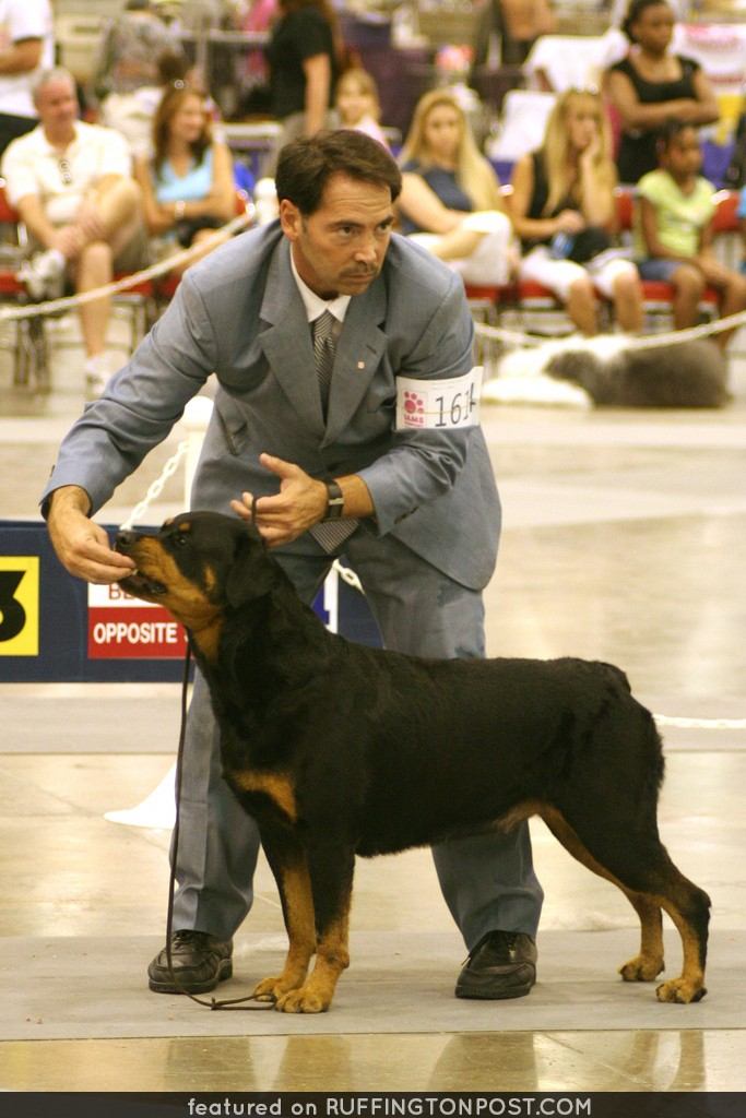 Rottweiler Concentration