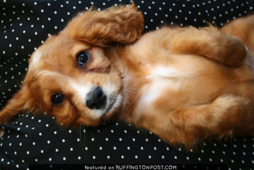 Soft puppy