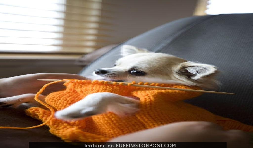 sora用セーター製作中。