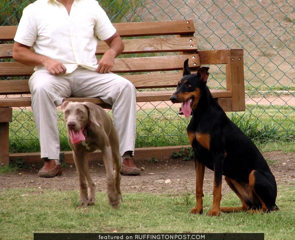 un weimaraner q conocimos en el parque, y hannah