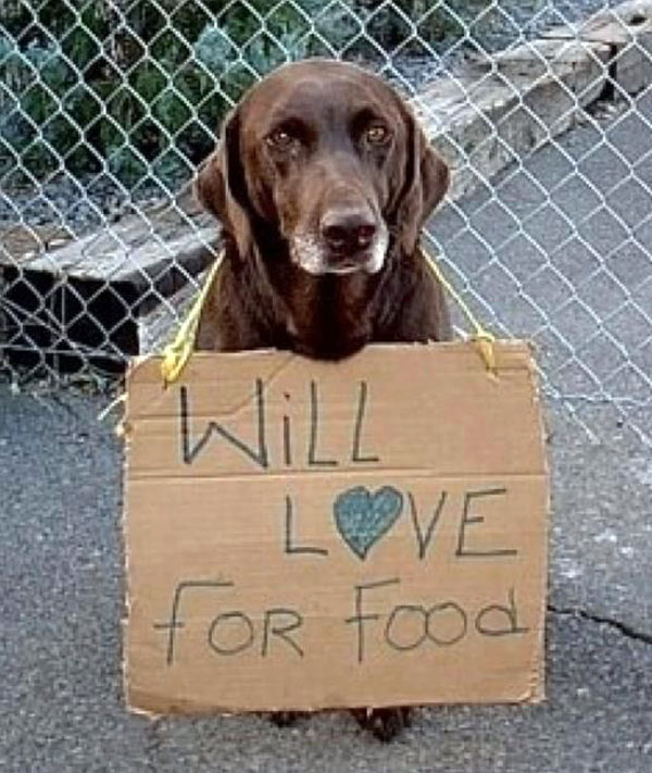 will-love-for-food
