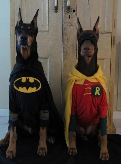 Batdoberman and his sidekick
