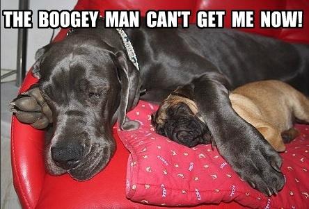 Pug with his big pal