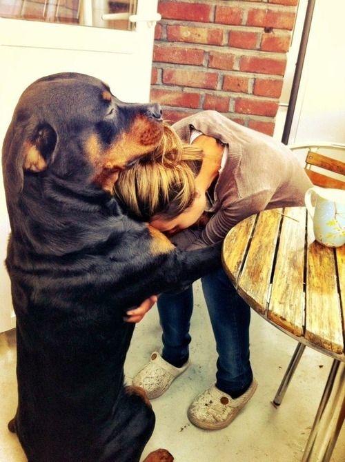 Loving Rottie Hug