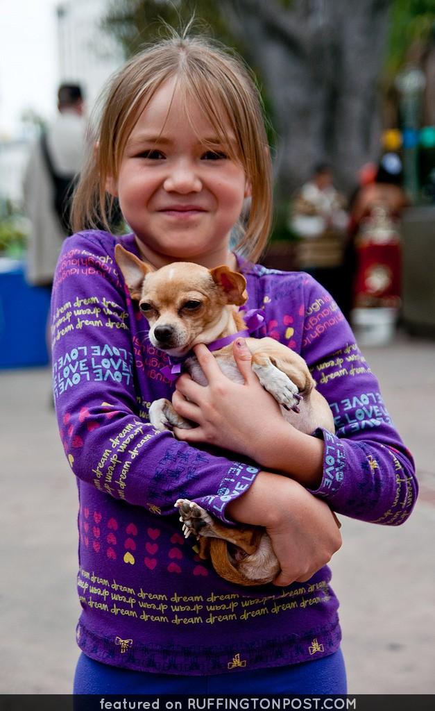 Chihuahua Cuddles