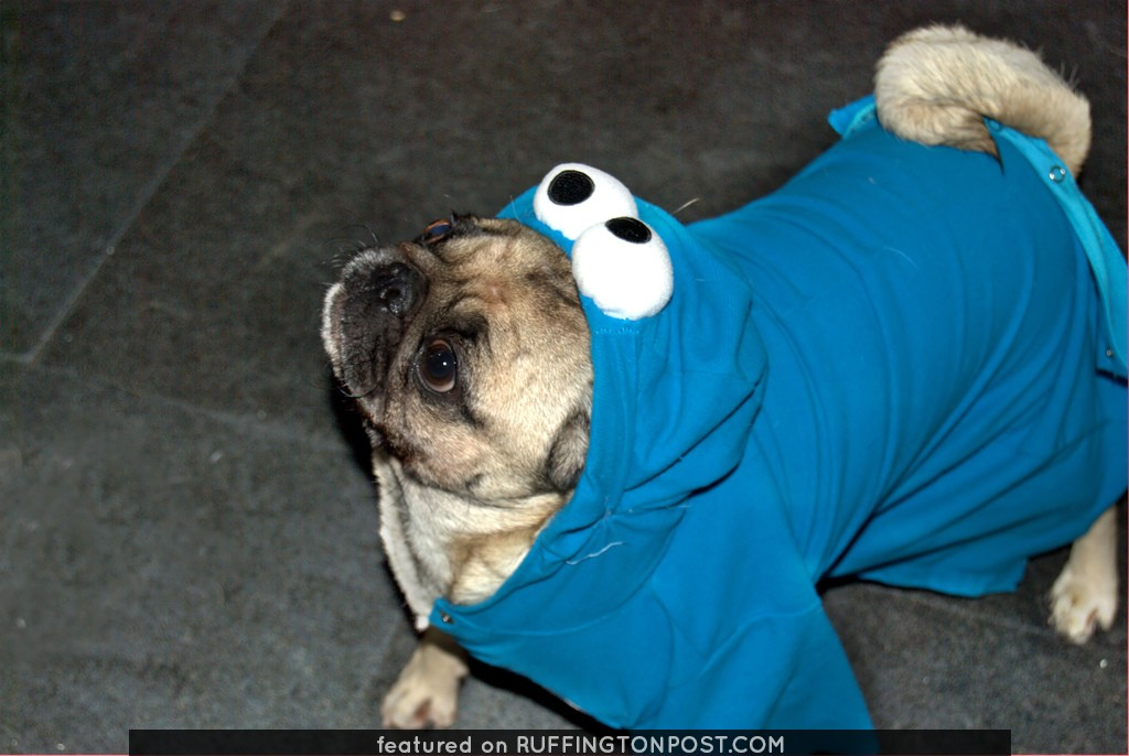Pug-o-we'en 2007 [1]