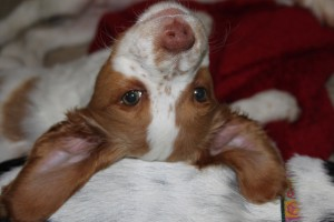 10 Puppy Facts