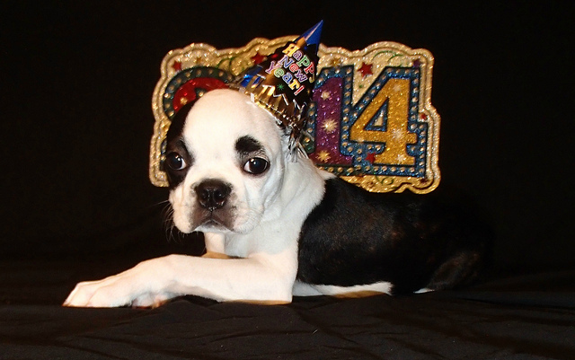 Happy New Year - 13 Ways to Love Your Puppy