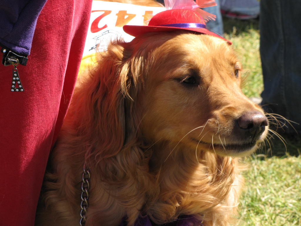 red hat retriever