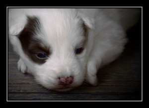 All About Bringing Home a New Puppy and What You Need to Know