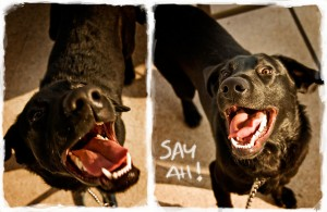 Dog Dental Essentials