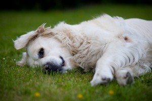 Doggie Health Problems, The 6 Most Common