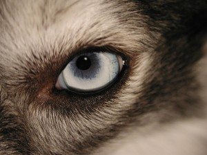 Eye Care for Your Dog
