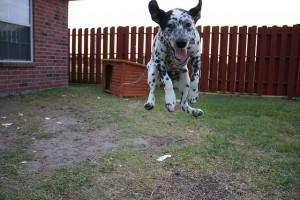Important Preventative Dog Health Care Tips