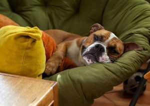 Is Your Dog Sick - Here is How to Tell