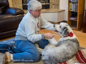More Tips for Dog Owners on Grooming