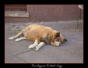 Nutrition Tips for Overweight Dogs
