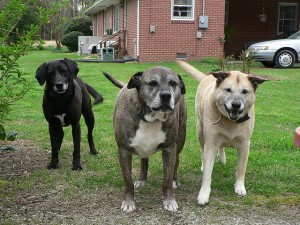 Understanding the Different Breeds of Dogs