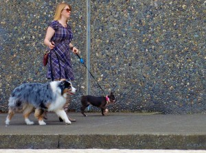 All About Walking the Dog