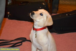 An Interview of Dog Training Tips From Cesar Millan