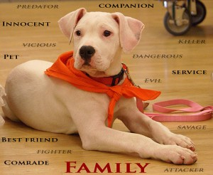 Pit Bull Love, Breed-Specific Legislation May Be Outlawed by Six More States