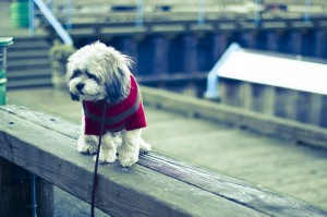Should You Own a Dog - 5 Reasons You Should Not