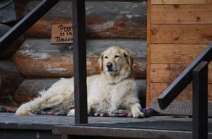 7 New Dog Owner Health Tips