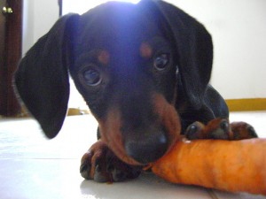 Is a Vegetarian Diet Healthy for Dogs