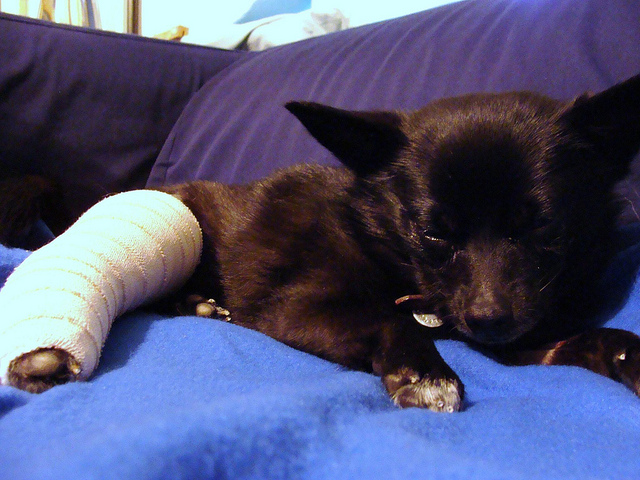New Surgery Repairs Dog Knees