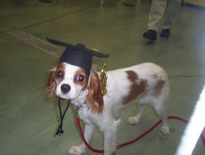 Should Your Dog Attend Obedience School