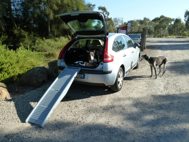How to Deal with Dog Car Sickness and Hyperactivity