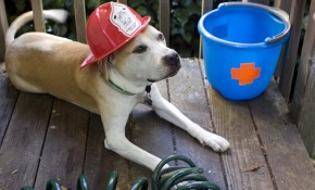 4 Pets Rescued from House Fire!