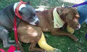Breaking News in Florida, 17 Dogs Rescued from Fighting!