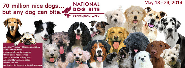 Root Causes and Prevention for Dog Bites