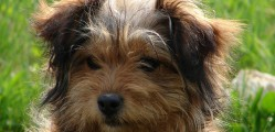3 Grooming Tips for Pets That You Can Do At Home